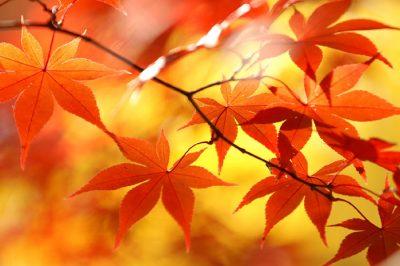 【今週の運勢】11月6日(月)~11月12日(日)の運勢第1位は蠍座! そまり百音の12星座週間占い